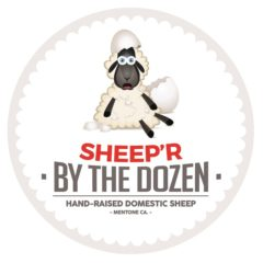 Sheep 'R'  By The Dozen
